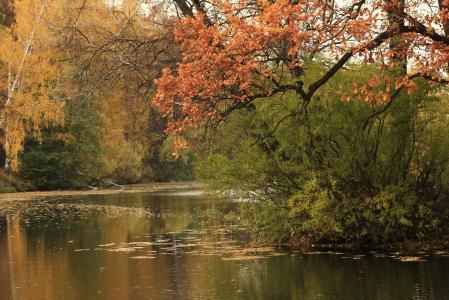 Обои река, осень, деревья