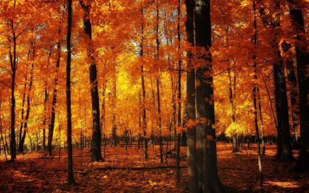 Обои осень, деревья, листья