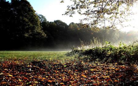 Обои лес, деревья, осень, листья
