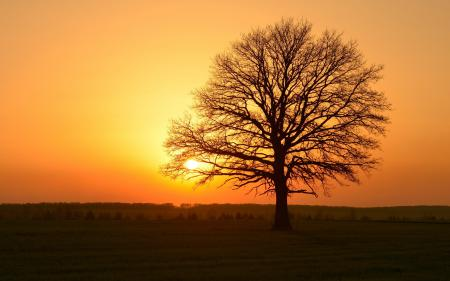 Заставки закат, дерево, природа, пейзаж