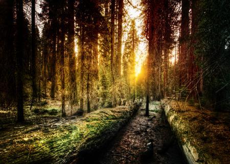 Заставки Old Forest, Yosemite, california, калифорния