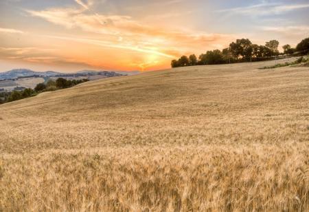 Фотографии поле, колоски, небо, пейзаж