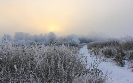 Заставки зима, поле, туман, утро