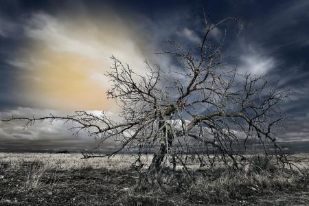 Картинки поле, дерево, небо, ночь