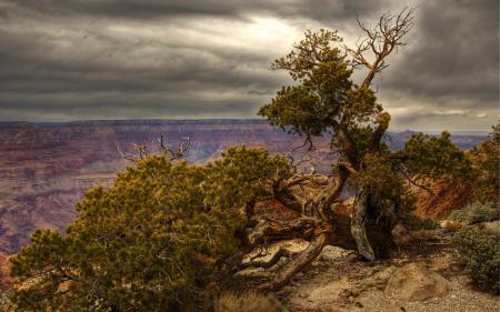 Обои дерево, горы, пейзаж, HDR