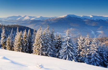 Обои зима, горы, пейзаж, ель