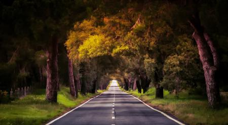Картинки Португалия, дорога, деревья, лес