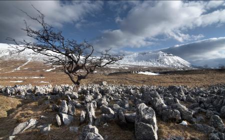 Заставки поле, камни, дерево, пейзаж