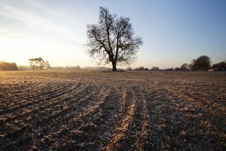 Фото поле, дерево, природа, пейзаж