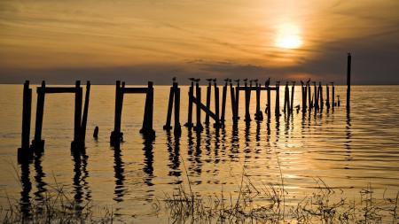 Фотографии море, закат, птицы