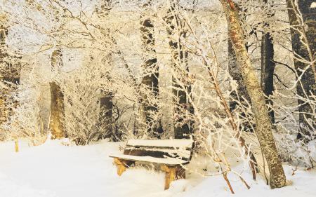 Картинки природа, зима, сквер, парк