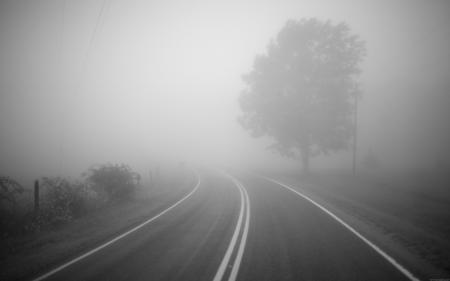 Заставки дерево, дорога, туман, поворот