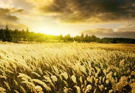 Фотографии Warm Sunrise, рассвет, небо, поле