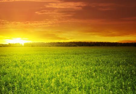 Обои Green field, красивый, закат, солнце