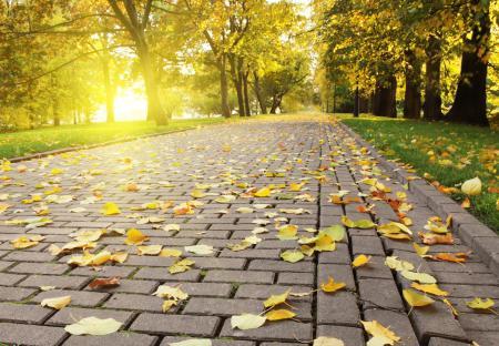 Обои Autumn leafs, осень, опадающая, листва