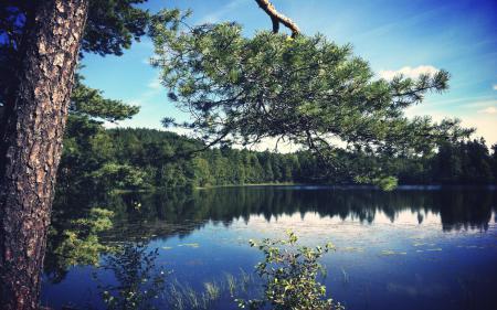 Фотографии сосна, лес, озеро, вода