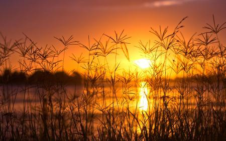 Картинки закат, озеро, трава