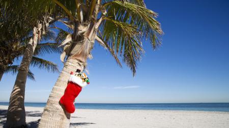 Обои Пальмы, носок, подарки, игрушки