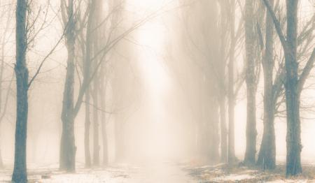 Фото природа, зима, снег, деревья