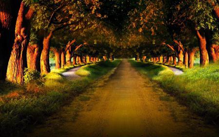 Картинки лес, деревья, природа, путь