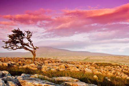 Фотографии дерево, долина, камни, небо