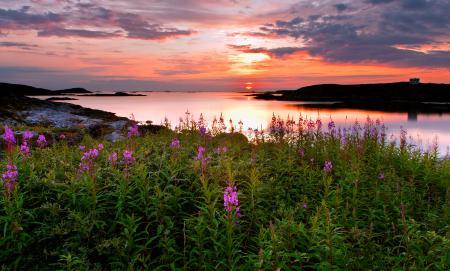 Фото закат, море, цветы