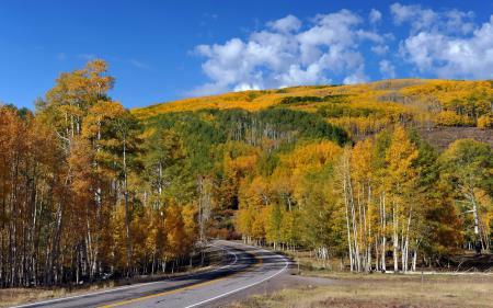Обои дорога, деревья, пейзаж