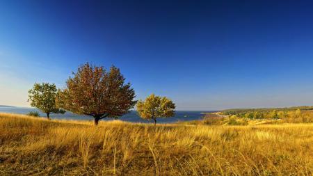 Фотографии поле, деревья, небо, пейзаж