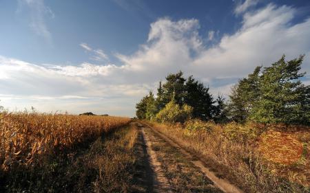 Картинки поле, дорога, осень