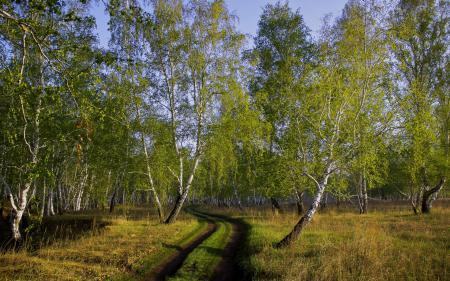 Фотографии осень, дорога, берёзы, лес