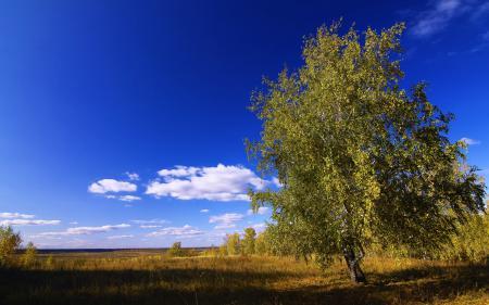Обои поле, дерево, небо