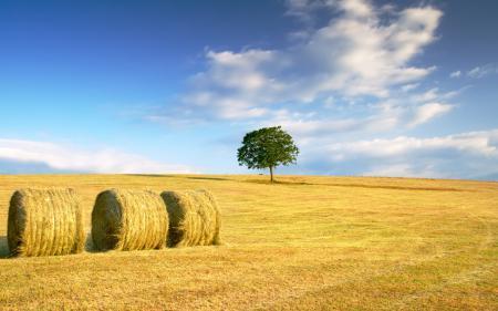 Картинки осень, осенние обои, поле, поля