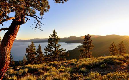 Фотографии утро, горы, деревья