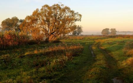 Фото утро, поле, дорога