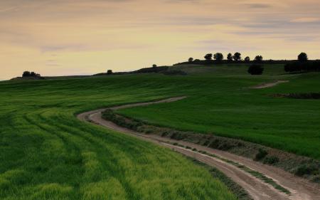 Фотографии поле, дорога, пейзаж
