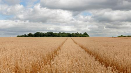 Фото пейзаж, природа, поле