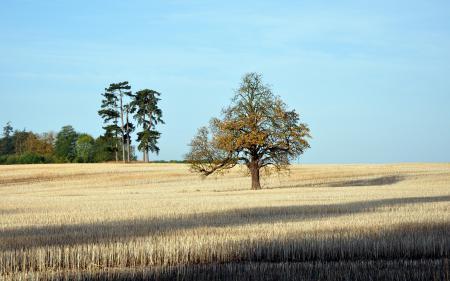 Заставки поле, дерево, природа, пейзаж