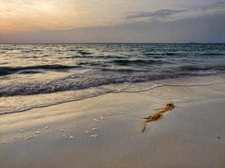 Фото море, берег, песок, водоросли