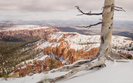 Обои горы, дерево, природа, пейзаж