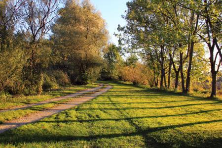 Фото лес, дорога, деревья, трава