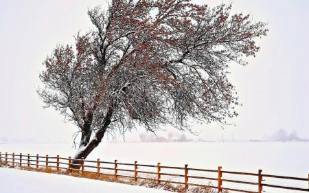 Картинки дерево, забор, зима