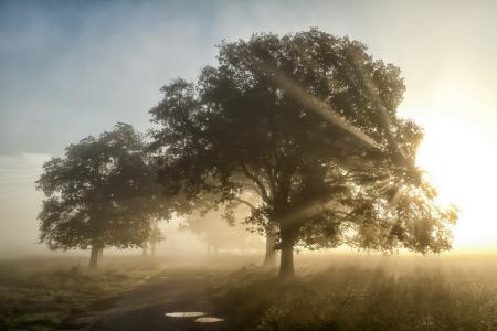 Заставки утро, туман, дорога, деревья