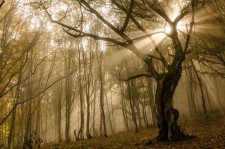 Обои Лес, осень, деревья, солнце