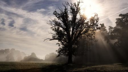 Фото утро, поле, туман, пейзаж