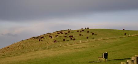 Фотографии Newlands, England, United Kingdom, cows