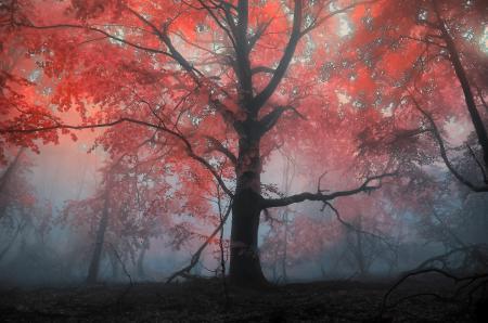 Заставки Пейзажи, осень, деревья, дерево