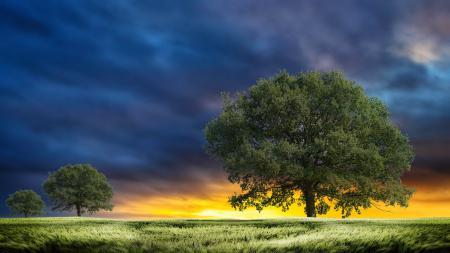 Картинки Поле, трава, деревья, листва