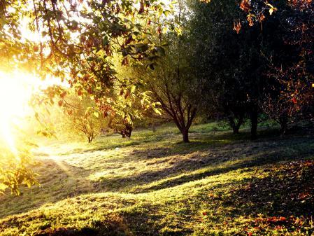 Обои лето, деревья, поляна, солнце