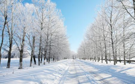 Картинки зима, снег, дорога, лес