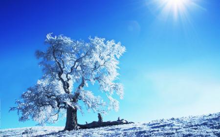 Фото пейзажи, природа, дерево, деревья